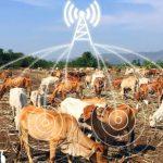 ¿Vacas inteligentes? O sobre el diseño de productos del IoT que no fallen